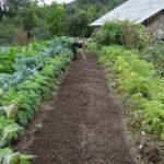 food, garden, power-960070.jpg